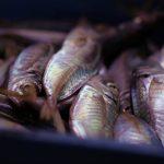 Linda's Microwave Fish Fillets