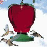 Hummingbird nectar do's and don'ts