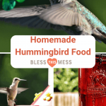 The Best Homemade Hummingbird Food Recipe   Bless This Mess