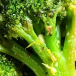 How to Cook Frozen Broccoli (No roasting required!) - Cook Fast, Eat Well