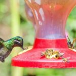 12 Tips on How to Keep Bees Away From Hummingbird Feeders – Fine Garden Tips