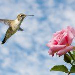 How To Make Hummingbird Food - Food Storage Moms