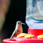 How To Clean Hummingbird Feeder With Vinegar - arxiusarquitectura