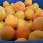 Microwave recipes for apricots   Home in the Alice