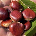 Chestnut Roasting | Fante's Kitchen