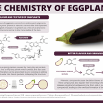 The chemistry of aubergine (eggplant) colour, bitterness and browning –  Compound Interest