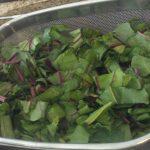 Wilted Beet Greens | The Greek Vegan