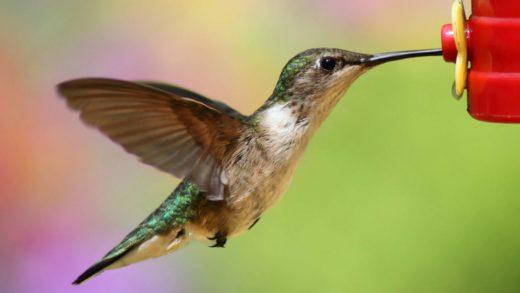 How to Make Hummingbird Nectar using TWO ingredients! - Bird Watching HQ