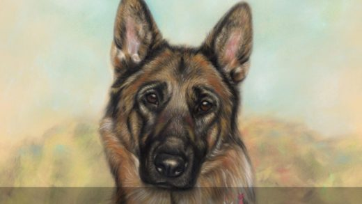Pastel Drawing of German Shepherd Izzy - Final Scan - On The Easel