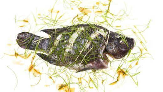 Microwaved Tilapia - Modernist Cuisine