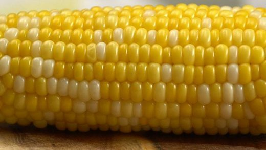 The best way to cook corn on the cob! – Food Science Institute