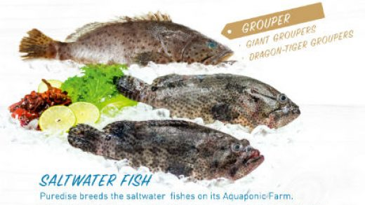 hydean_giant-grouper - Seafood Expo Asia