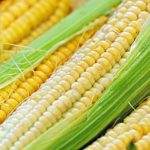 how do you cook corn on the cob in the microwave without husks
