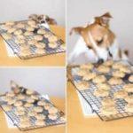 Homemade Dog Treats - Creative Homemaking