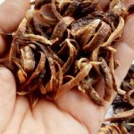 Microwave Raw Onions: Soft or Crispy - Food Cheats